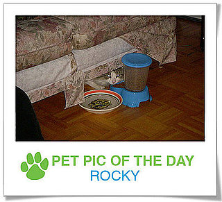 Pet Pics on PetSugar 2008-11-11 09:30:33