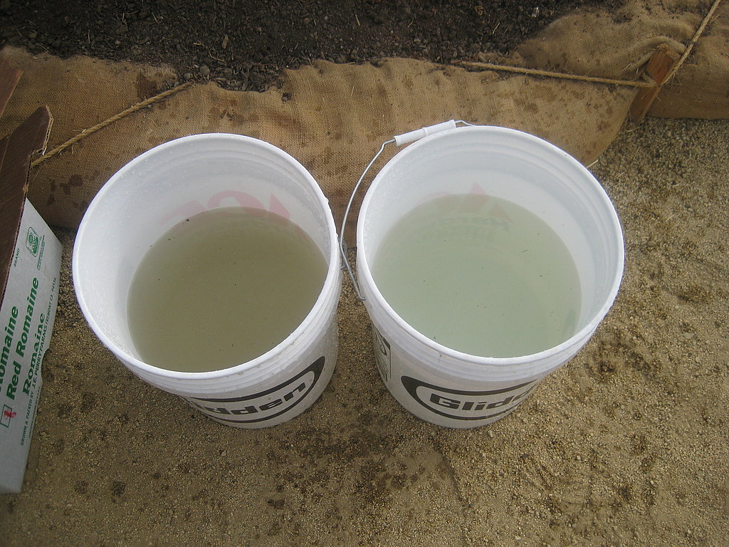 After a bunch of greens is harvested, you give it a double dip, first in the left bucket of water and next in the right bucket.
