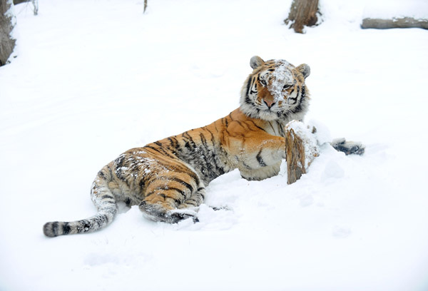 A Snowy Day at the Bronx Zoo