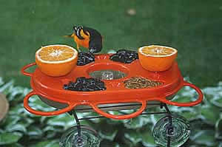 Fruit Feeder and Jelly