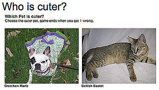 Could You Pick Which Pet is Cuter for Money?!