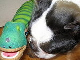 North and Lexi (the Pleo)
