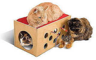 Kitty Bunkbed and Playroom: Spoiled Sweet or Spoiled Rotten?