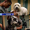 The Season Finale of &quot;Groomer Has It&quot; on Animal Planet: Who Won?