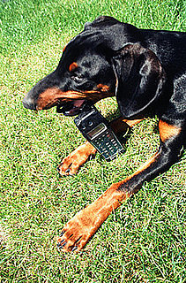 Oh No, Puppy! Dog Swallows Cell Phone Whole