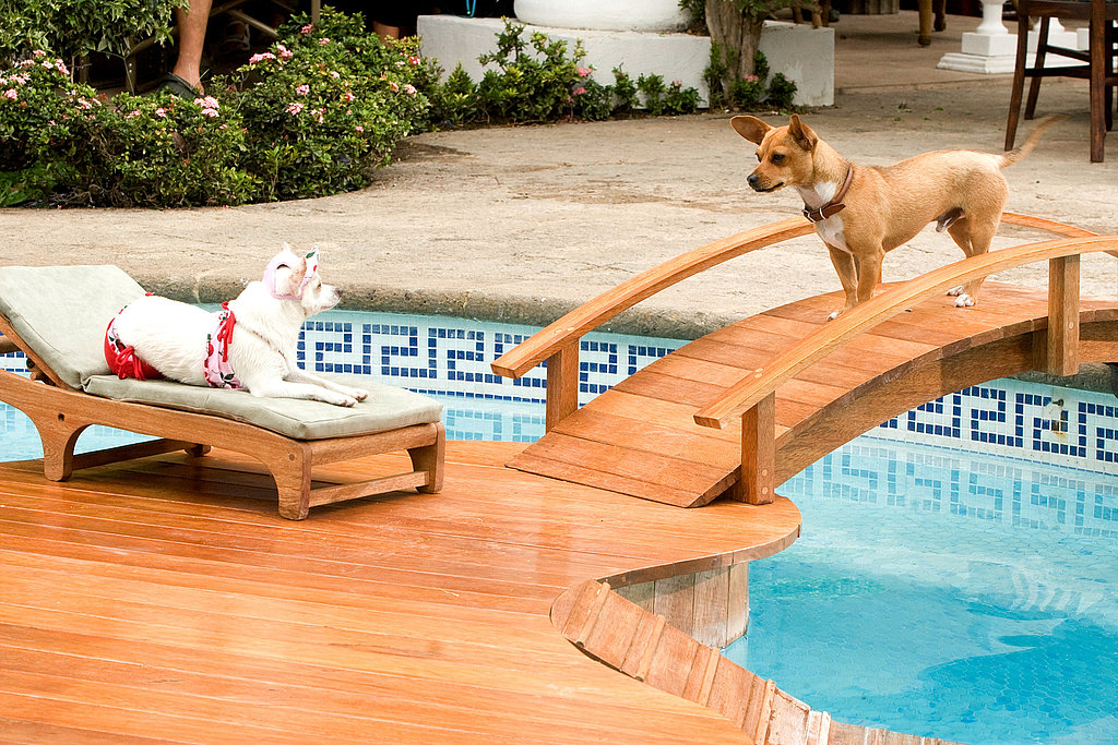 Behind-the-Scenes: Chloe's Beverly Hills Chihuahua Wardrobe