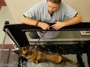 The Scoop: Military Hospital Opens For Combat-Wounded Pups