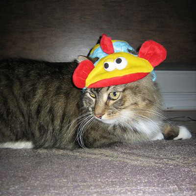 It&#039;s Never Too Soon For Cats in Hilarious Hats!