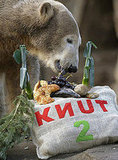 Happy Birthday, Knut the Cute!