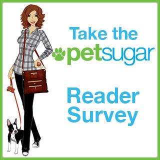 Take the PetSugar Reader Survey!