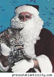 Pet Bobcat Attacks Santa at PetSmart: In the LINK of an Eye!