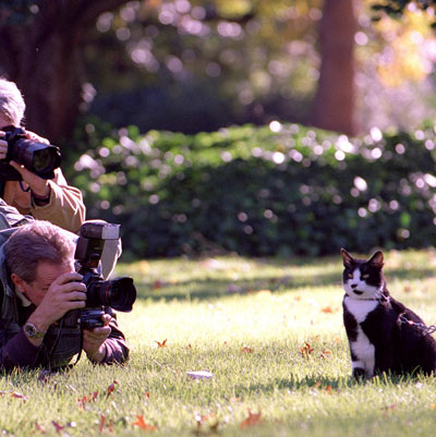 Photos of Socks, First Cat of Former President Bill Clinton (and Chelsea Clinton) Who Died Of Lung Cancer In Betty Currie&#039;s Care