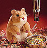 Should Children Under 5 Have Hamsters as Pets?
