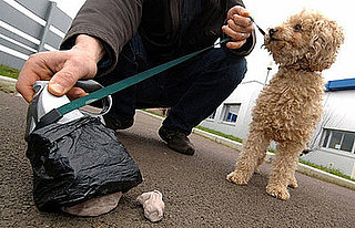 Israeli City Using DNA to Stop Doggie-Dropping Disasters
