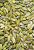 Definition of Cardamom