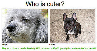 "Play ""Which Pet Is Cuter?"" and Win Even More Money!"