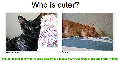 "Have You Played ""Which Pet Is Cuter?"" for Money Yet?!"