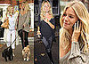 Photos Of Sienna Miller And Her Mum Walking Dogs In London