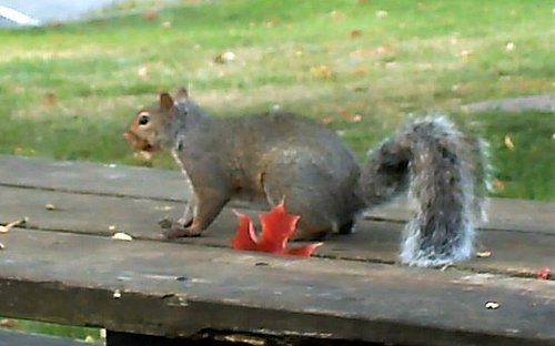 Those Cute Little Squirrels....