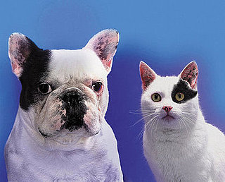 Which Pet Is Better For Your Health? Cats vs. Dogs