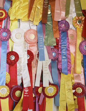 A collection of horse show ribbons is award-winning wall art.