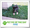 Pet Pics on PetSugar 2009-02-12 11:00:12