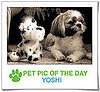 Pet Pics on PetSugar 2009-02-10 07:00:22