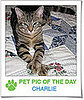 Pet Pics on PetSugar 2009-02-11 08:00:17