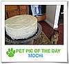 Pet Pics on PetSugar 2009-04-06 09:30:06