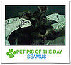 Pet Pics on PetSugar 2009-04-09 09:30:45