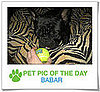 Pet Pics on PetSugar 2009-04-10 09:00:34