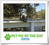 Pet Pics on PetSugar 2009-04-16 08:45:41