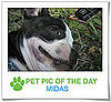 Pet Pics on PetSugar 2009-04-27 09:00:44