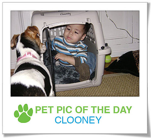 Pet Pics on PetSugar 2009-04-23 09:00:04