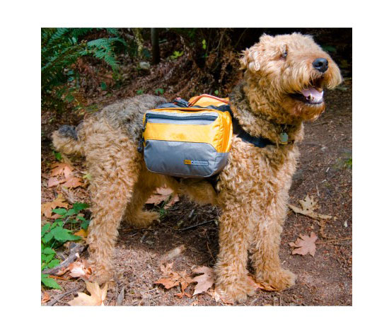 REI Adventure Dog Pack