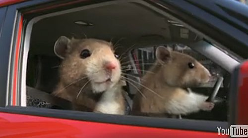 Kia Soul Hamsters Commercial