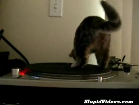 Cat Vs. Turntable