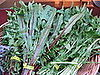 How to Enjoy Dandelion Greens