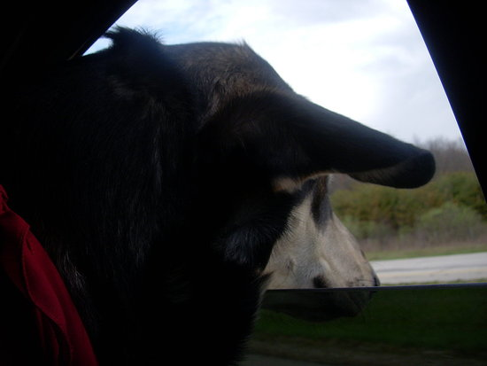 A small slide show of him out the window.  The most freedom he will get for two long months.