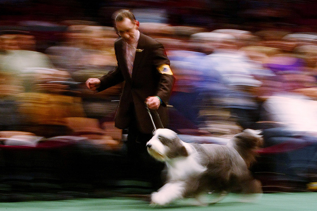 2009 Westminster Kennel Club Dog Show, Day 1