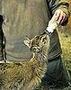 Gizmo the Nile Lechwe Antelope is Born in Budapest