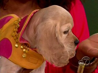 Oprah Winfrey's New Dog Sadie, a Cocker Spaniel