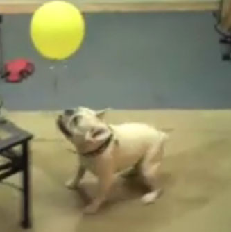 Super Cute Smooshy Alert! Sherman . . . and the Balloon