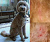 I Need Your Help . . . Has a Groomer Ever Injured Your Dog?