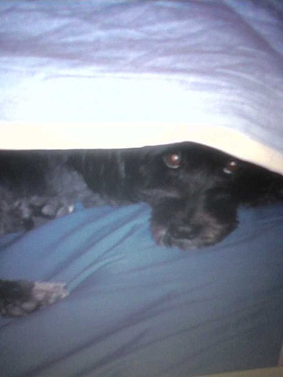 Bonnie got made into the bed...