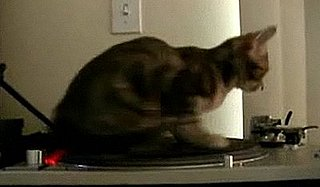 Cute Alert: DJ Kitty Spins Some Sick Tunes