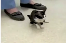 Bitsy: The World's Smallest Cat