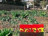 Instructables shows you how to create a community garden.