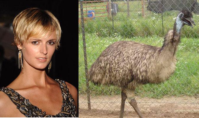 Jacquetta-Emu