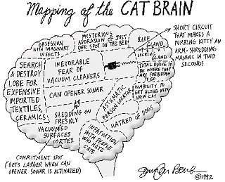 Cat Brain Map
